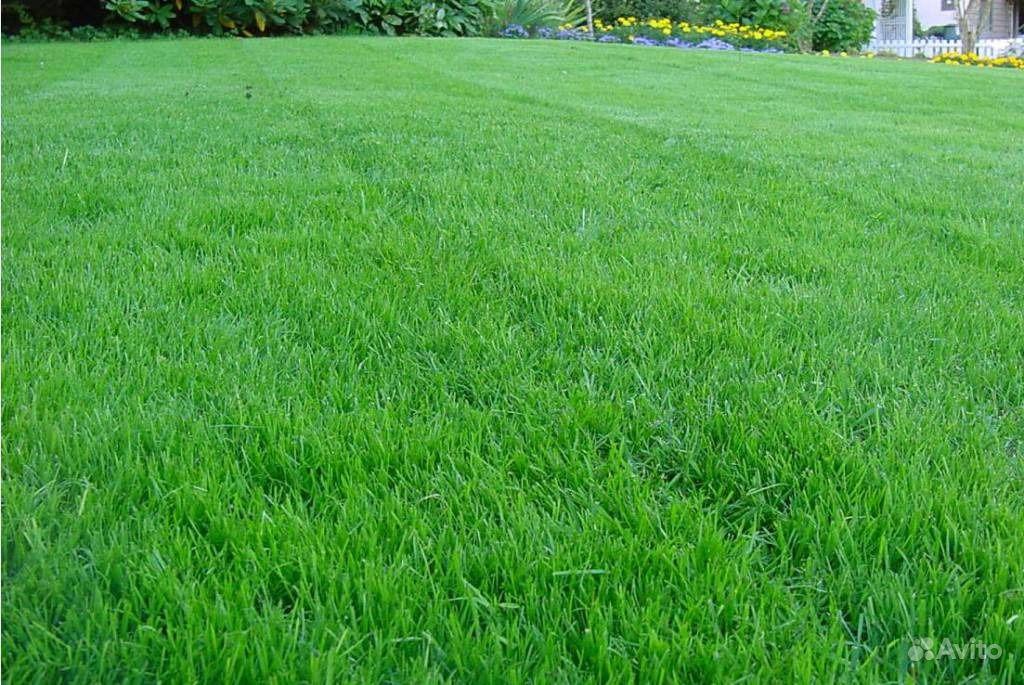 Газонная трава купить на Зозу.ру - фотография № 1