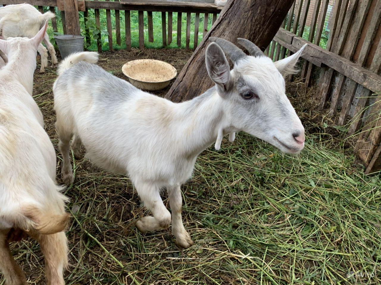 отдепелированная пизда катрин кози в красном селе онлайн гаража было темно
