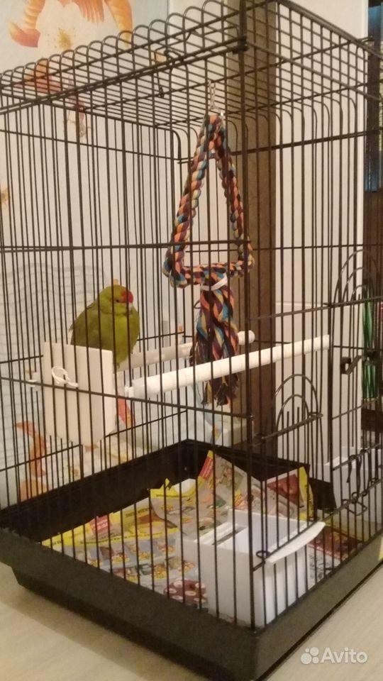 Попугай Какарик и клетка