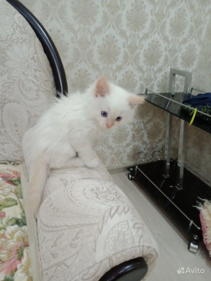Котик, в добрые руки