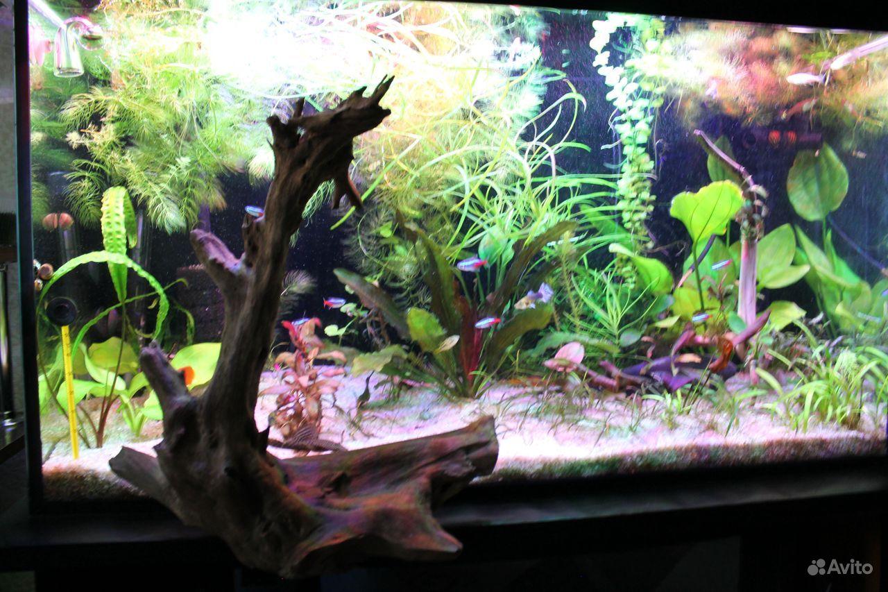 Коряга для аквариума,террариума купить на Зозу.ру - фотография № 3