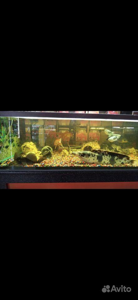 Готовый аквариум купить на Зозу.ру - фотография № 6