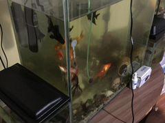 Акквариумы
