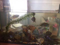 Аквариум со всеми рыбами, кормом, грунтом, компрес