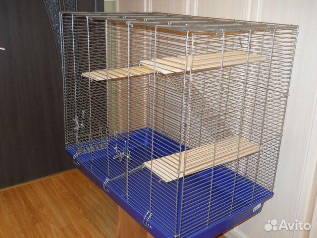 клетка доя крысы на авито в спб количество людей взорвали