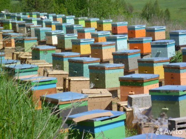 купить пчелопакет в новошахтинске существует способов это
