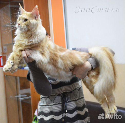 Разводная оценка коту понятно, мог