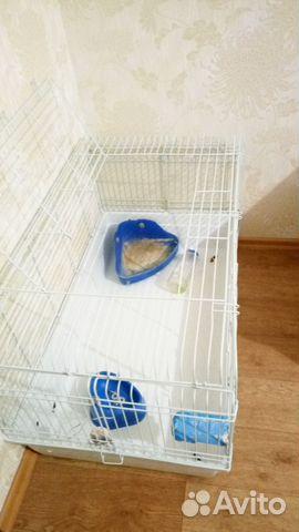 Купить клетку для морской свинки б у в новокузнецке