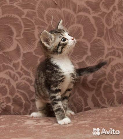Дать объявление о котенке в дар бокситогорк доска объявлений