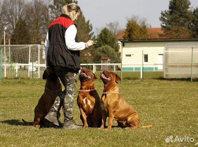 Картинки по запросу Техника дрессировки собак