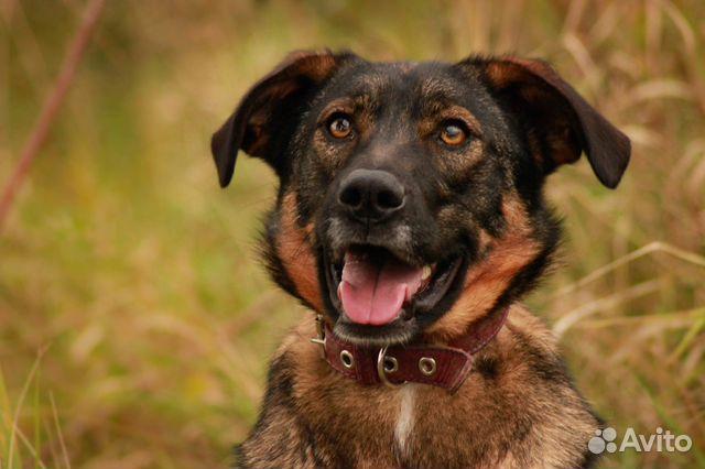 Собака в дар некрупная купить на Зозу.ру - фотография № 2