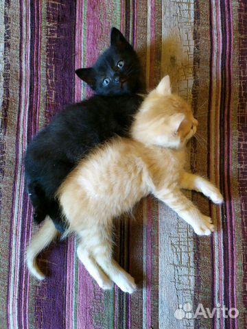 Отдам в хорошие руки чёрного котёнка
