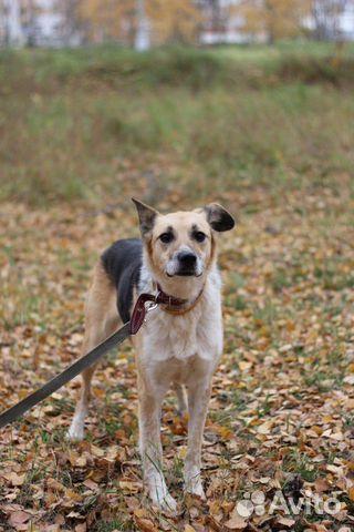 Собака Мия купить на Зозу.ру - фотография № 1