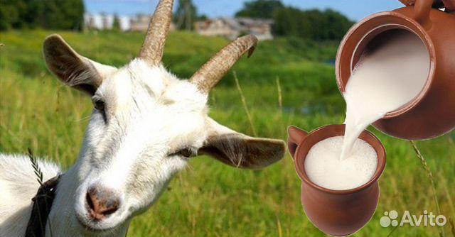 Козье молоко  89887273166 купить 1
