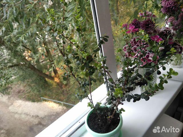 Самые красивые цветы для Вашего дома  купить 7