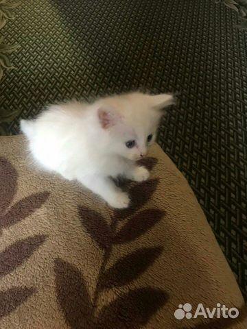 Белый кот  89209285077 купить 1