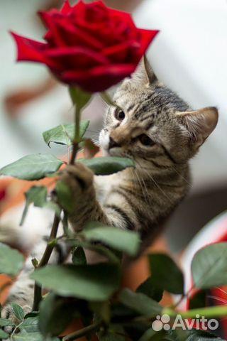 Котенок в добрые руки  89155387202 купить 7