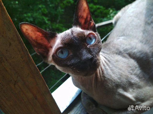 Отдам кошку в добрые руки  89785688266 купить 2