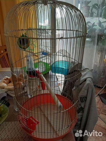 Клетка для попугая  89245763199 купить 1