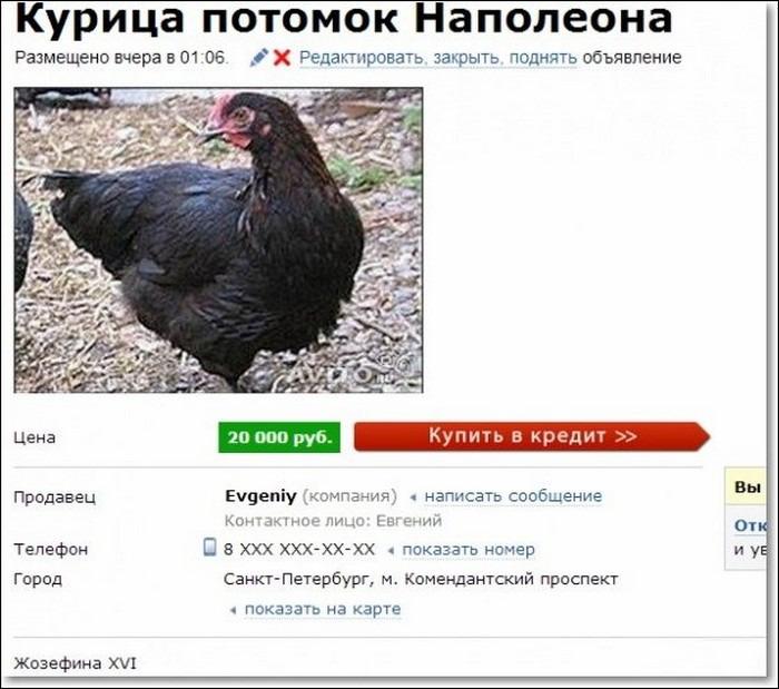 Открытки иркутск, прикольные картинки на авито