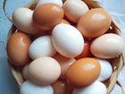 Яйца домашние