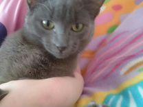 Ищем дом для котенка Тоши
