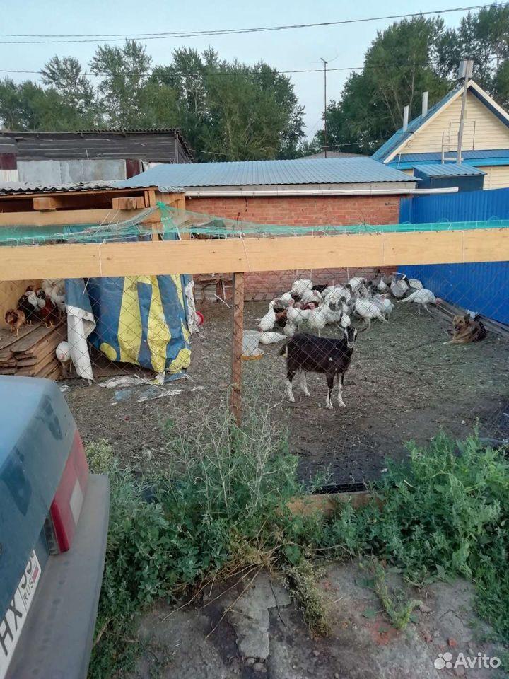 Корова 89514235232 купить 2