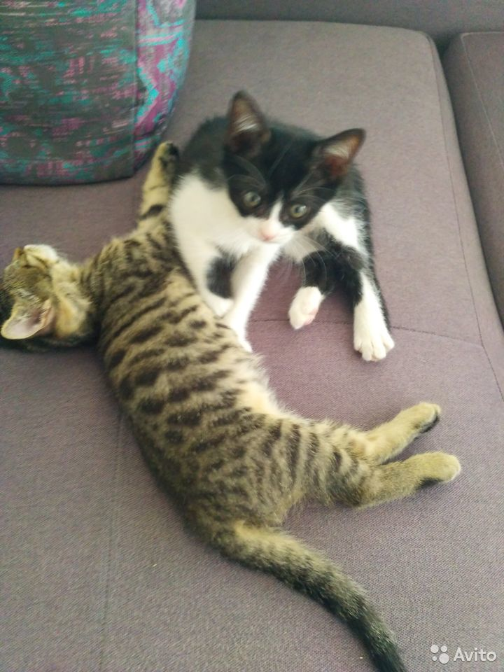 Котята в активном поиске