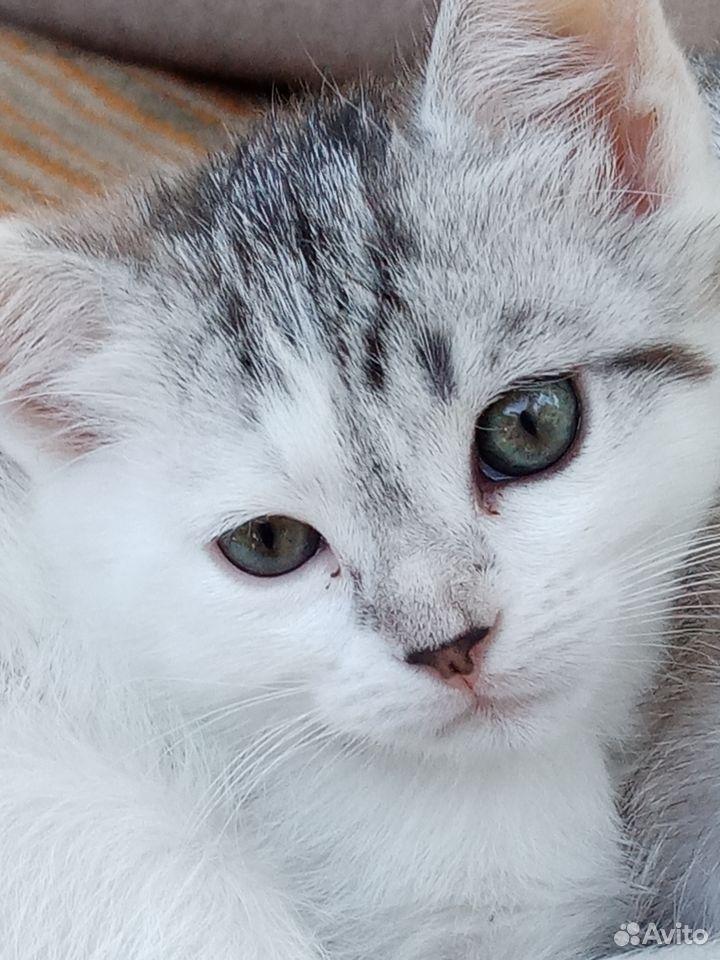 Отдам котенка  89033341281 купить 1