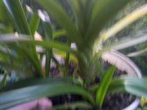 Отдам комнатные растения