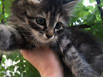 Котёнок в заботливые руки