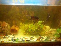 Продам аквариум 200 литров