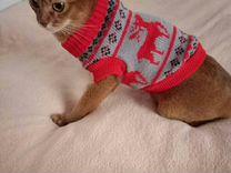 Новогодняя кофта для кошки